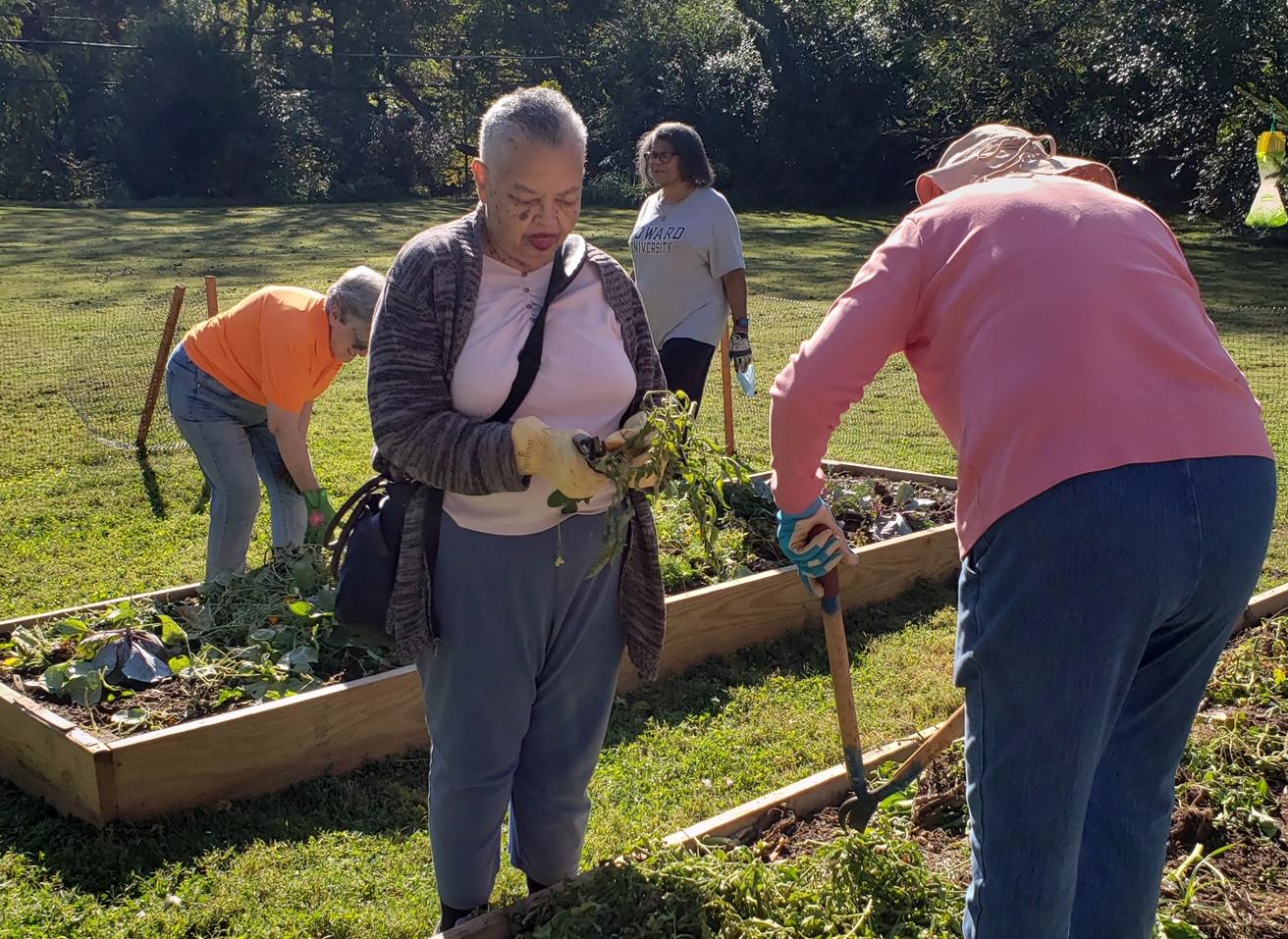 Communal Garden Fall Cleanup #2